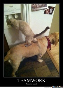 Dog helps cat raid the refrigerator, now thats teamwork!. Speaking of teamwork, did you know that GV Expo and GovComm have team up this year! Check out the article for more details.